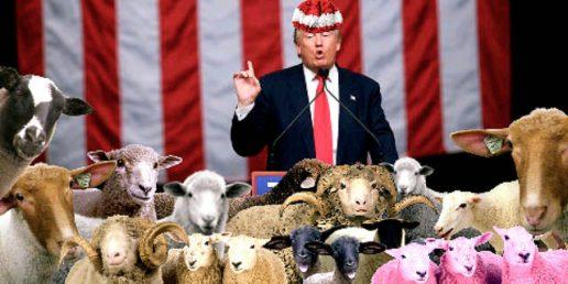 28390146606_c84b999e35_ztrump with sheep