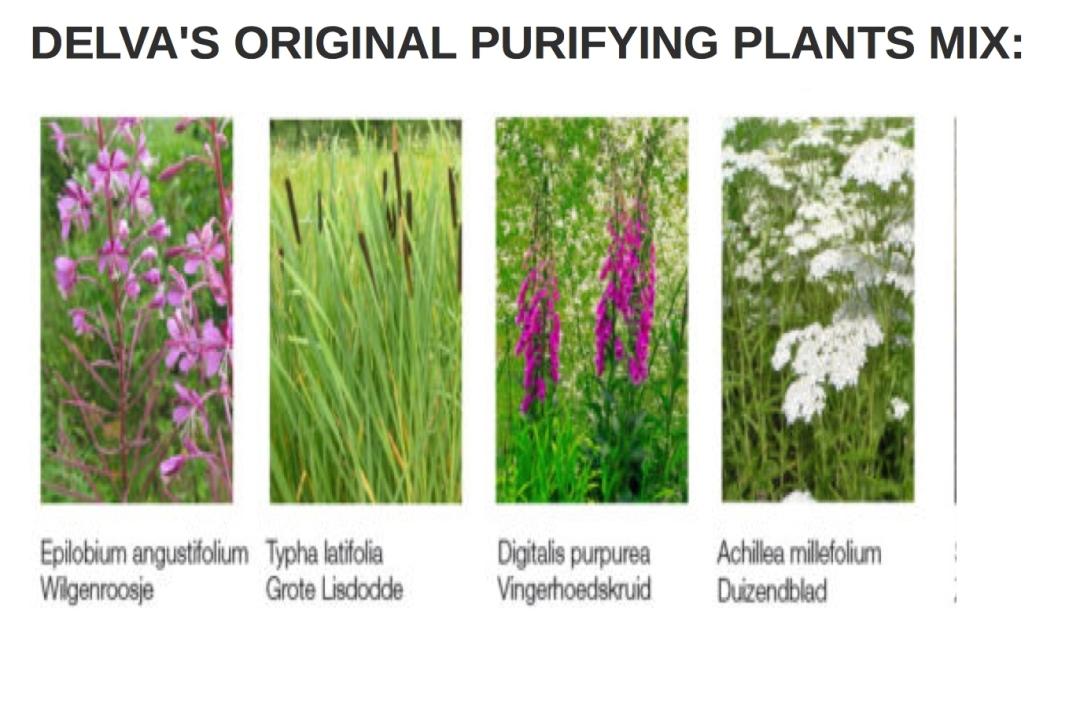 delvas original purifying plants